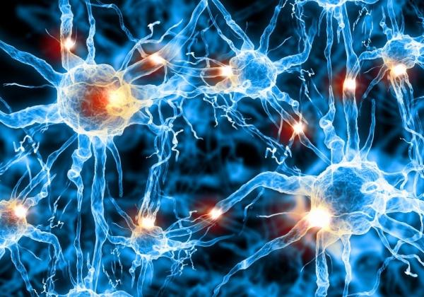 Centro di riferimento per la diagnosi e la terapia delle malattie neuromuscolari e neurodegenerative